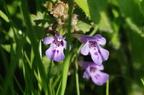 Цветы в траве