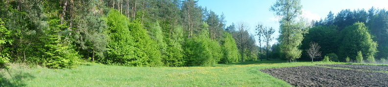 Лісок з галявинкою