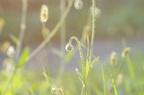 Луговые травки