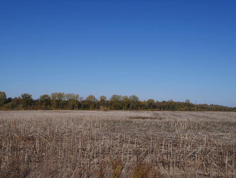 Соняшникове поле. Колись