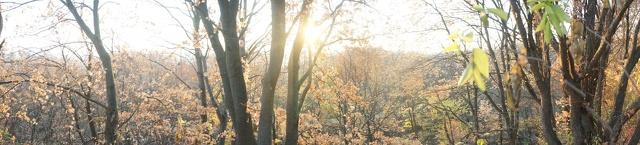 Сонце крізь дерева